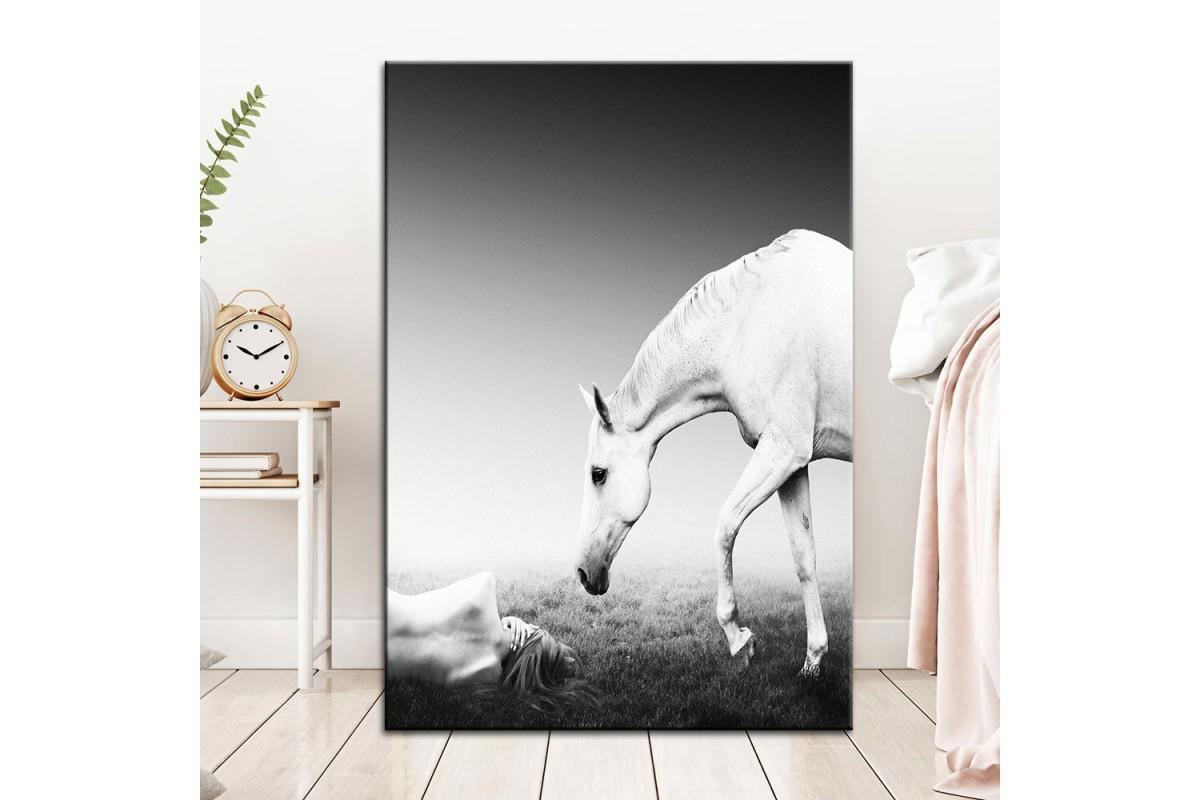 Beyaz At Kanvas Tablo dkm-k61-113
