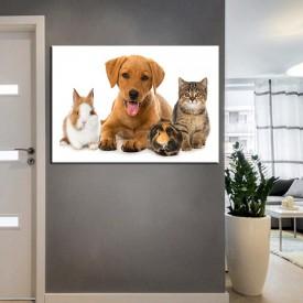 Pet Center Dekorasyon Veteriner Kliniği Tabloları kns-45