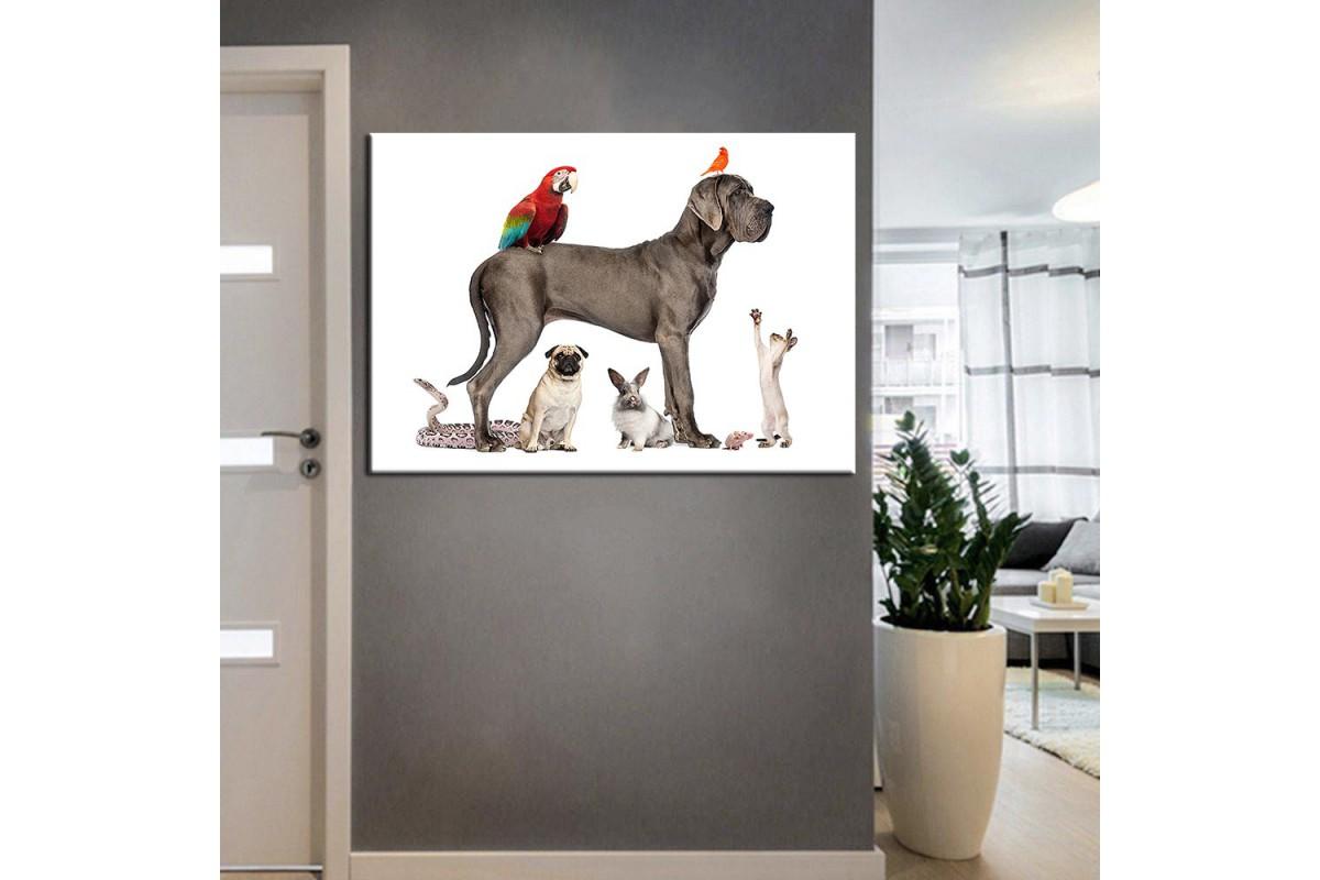 Pet Center Dekorasyon Veteriner Kliniği Tabloları kns-46