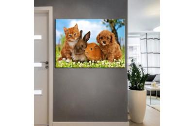 Pet Center Dekorasyon Veteriner Kliniği Tabloları kns-47