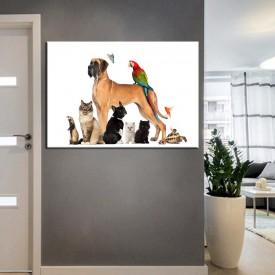 Pet Center Dekorasyon Veteriner Kliniği Tabloları kns-48
