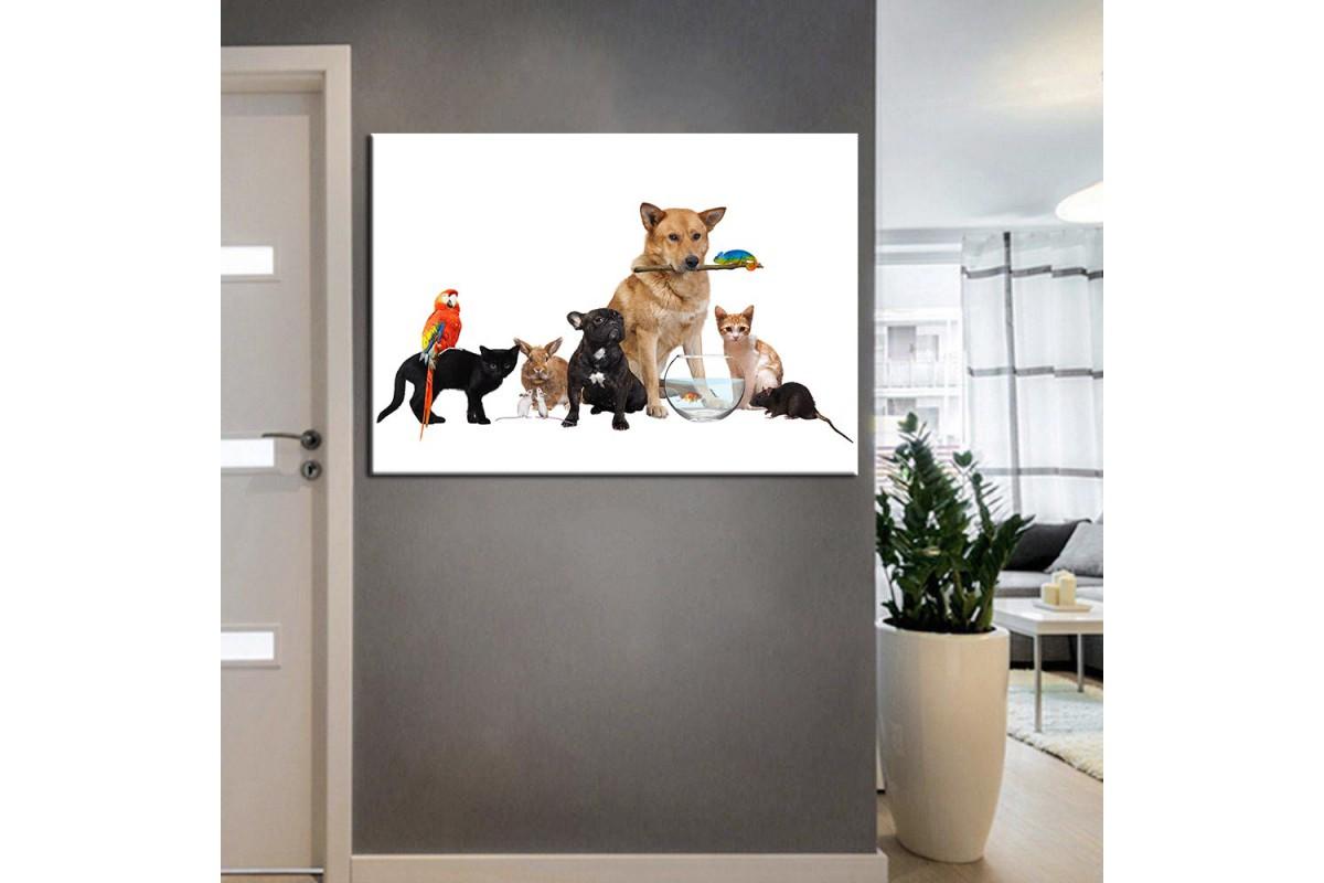 Pet Center Dekorasyon Veteriner Kliniği Tabloları kns-49