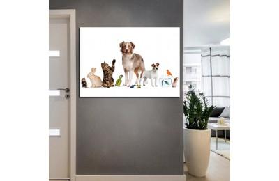 Pet Center Dekorasyon Veteriner Kliniği Tabloları kns-51