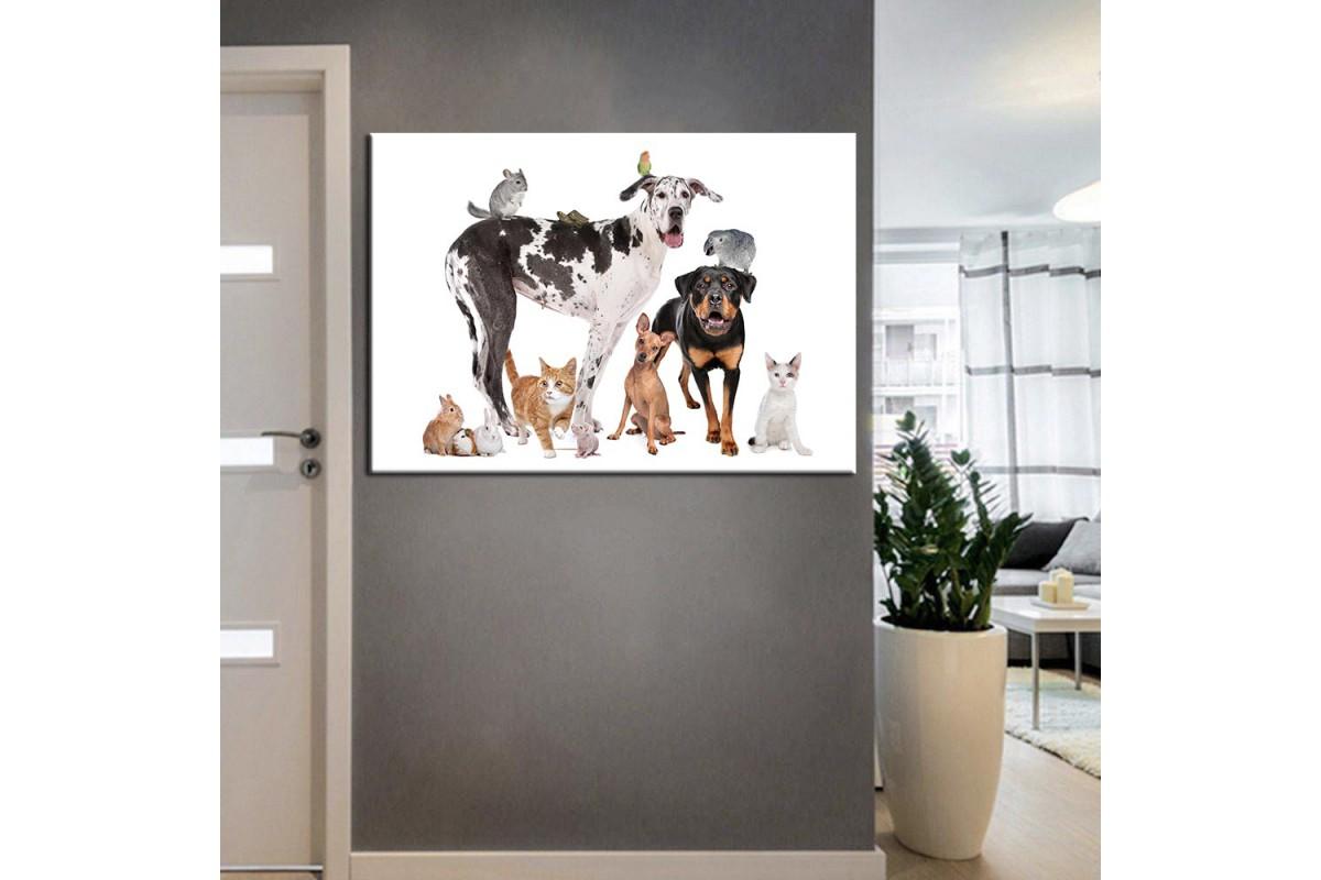 Pet Center Dekorasyon Veteriner Kliniği Tabloları kns-55
