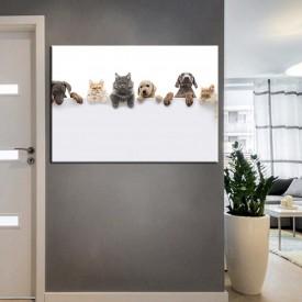Pet Center Dekorasyon Veteriner Kliniği Tabloları kns-56